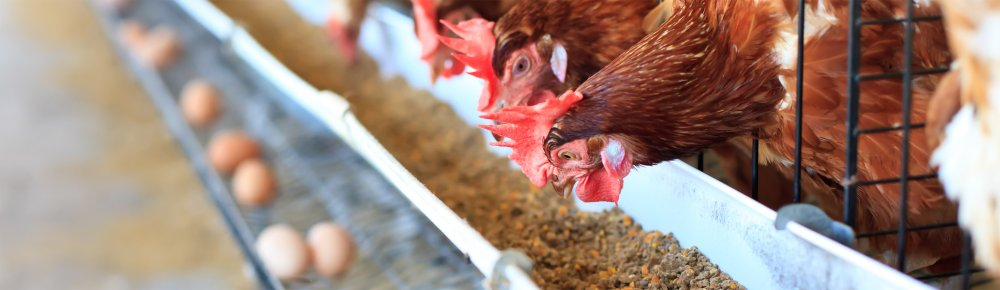 Poultry Management Support